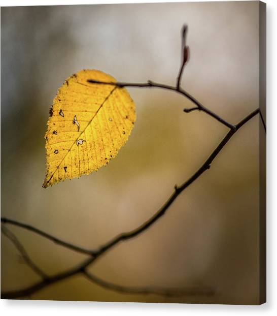 Canvas Print featuring the photograph Bright Fall Leaf 8 by Michael Arend