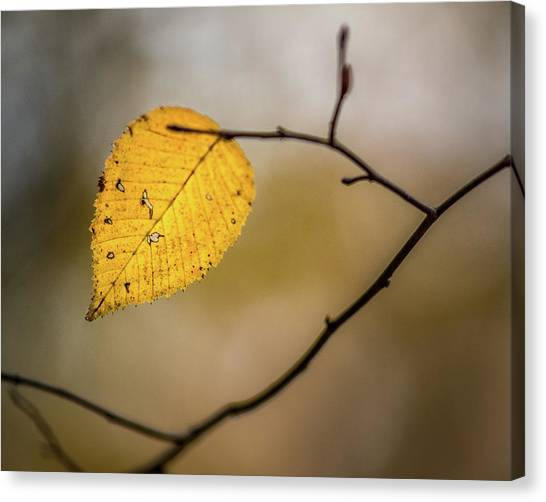 Canvas Print featuring the photograph Bright Fall Leaf 9 by Michael Arend