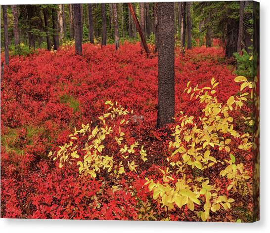 Boise National Forest Canvas Print - Brilliant Forest Red by Leland D Howard