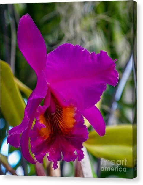 Brilliant Orchid Canvas Print