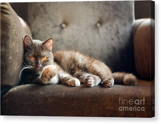 Household Canvas Print - British Cat At Home by Nina Anna