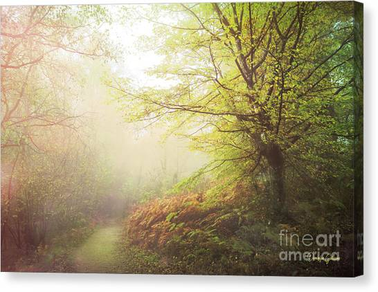 Broceliand Path Canvas Print