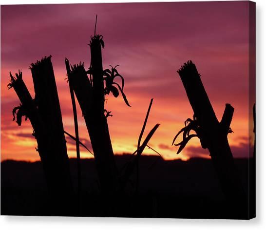 Broken Trees - Sunset Silhouettes Canvas Print