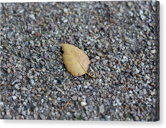Canvas Print featuring the photograph Brown Leaf On Gravel by Scott Lyons