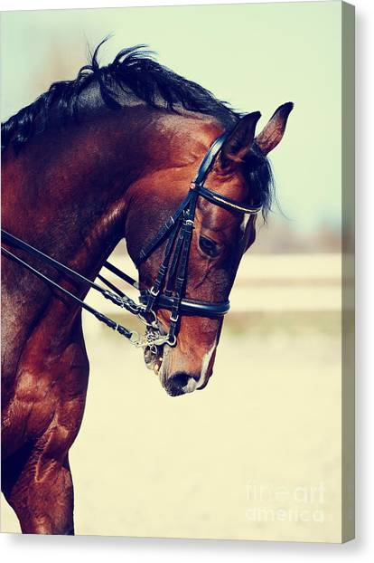 Purebred Canvas Print - Brown Stallion. Portrait Of A Sports by Elya Vatel