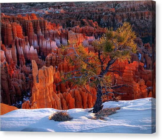 Bryce Canyon Winter Light Canvas Print