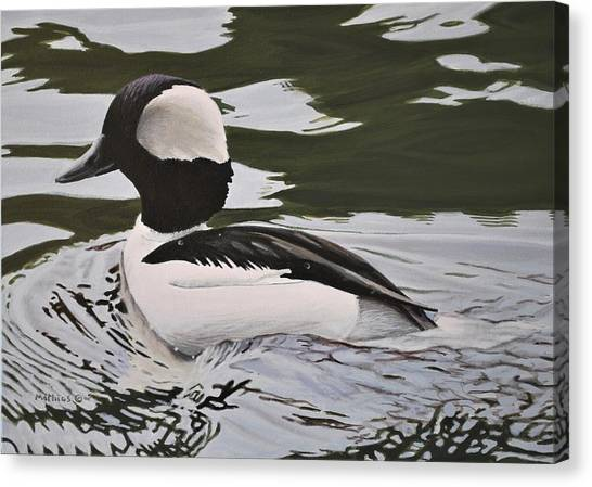 Bufflehead Canvas Print