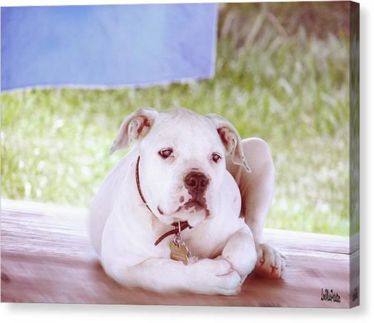 Bulldog Rana Art 80 Canvas Print