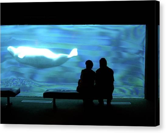 Fish Tanks Canvas Print - Buluga Whale In Acquarium by David Smith