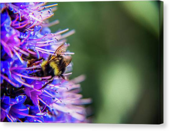 Busy Bee 2 Canvas Print