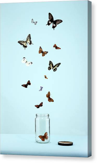 Butterflies Escaping From Jar Canvas Print by Martin Poole
