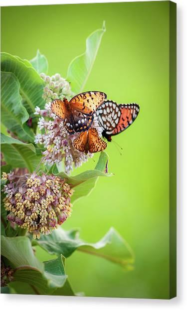 Butterfly Buffet II Canvas Print