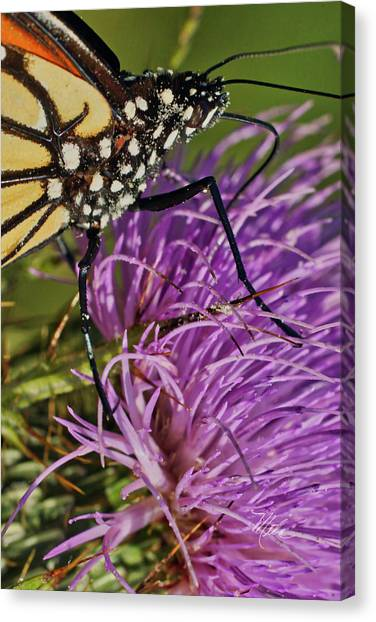 Butterfly Closeup Vertical Canvas Print