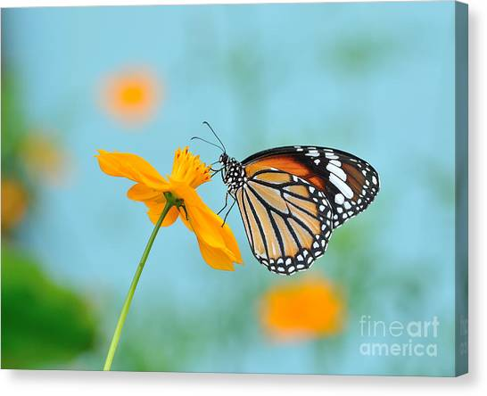 Yellow Butterfly Canvas Print - Butterfly Common Tiger And Flower In by Panda3800