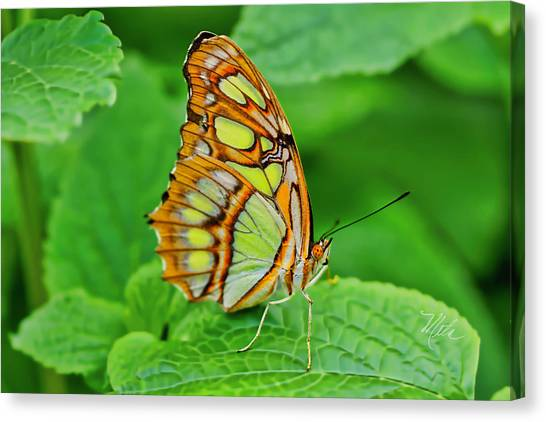 Butterfly Leaf Canvas Print