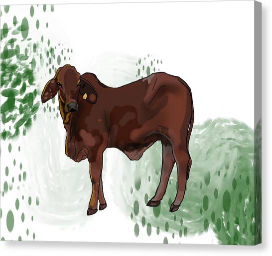 Canvas Print - C Is For Cow by Joan Stratton