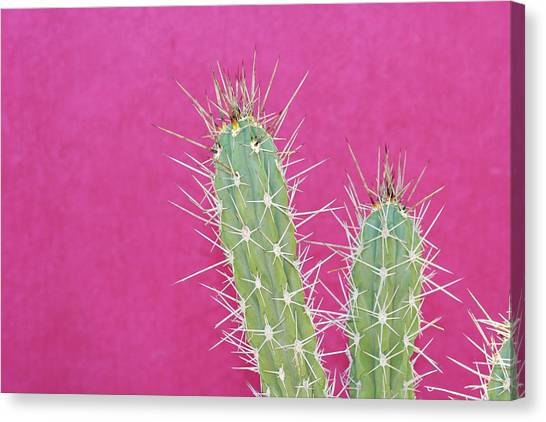Cactus Against A Bright Pink Wall Canvas Print