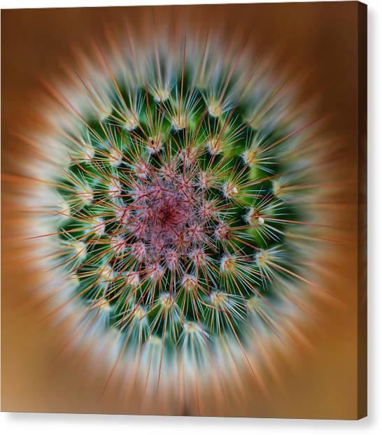 Cactus Cooler Canvas Print