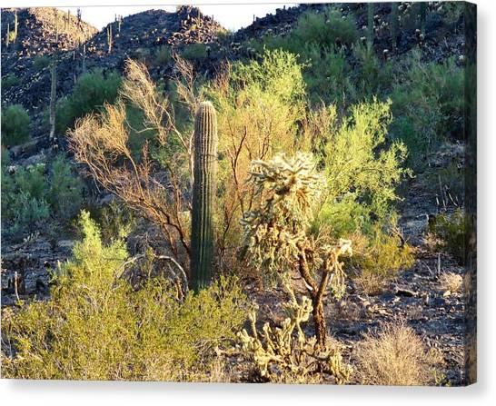 Cactus Kingdom Canvas Print