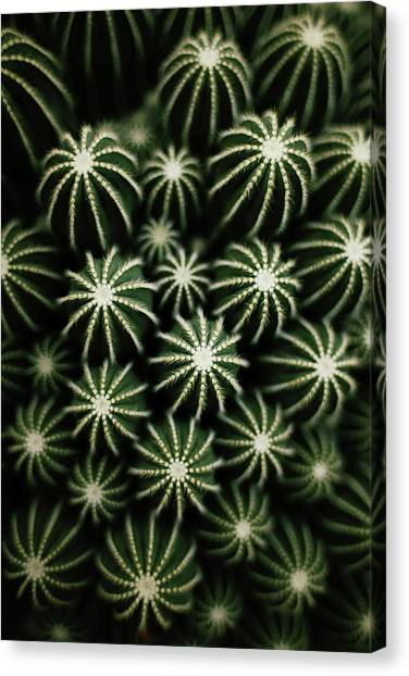Cactus Canvas Print by T*tomorrow