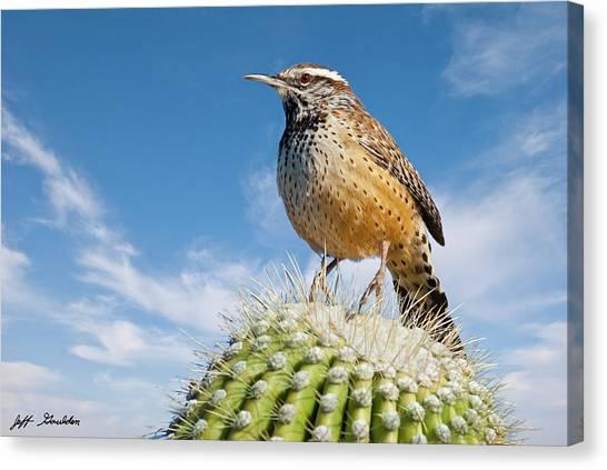 Cactus Wren On A Saguaro Cactus Canvas Print