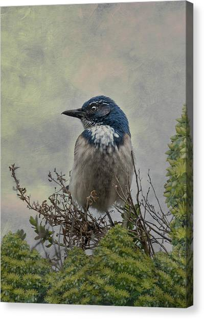 California Scrub Jay - Vertical Canvas Print