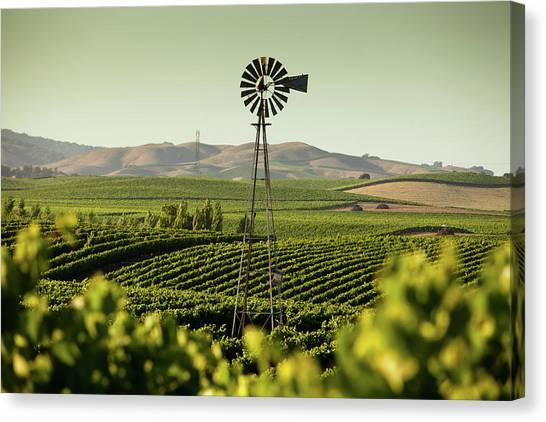 Sonoma Valley Canvas Print - California Wine Country by Halbergman