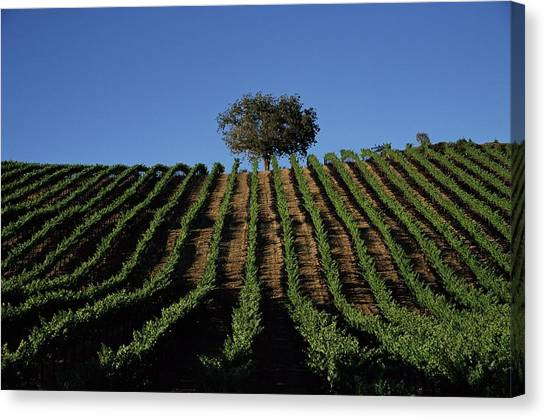 Sonoma Valley Canvas Print - Californias Winegrape Growing Region Of by George Rose