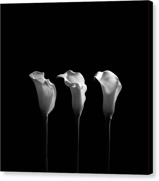 Calla Canvas Print - Calla Lilies In Black And White by Alfonse Pagano