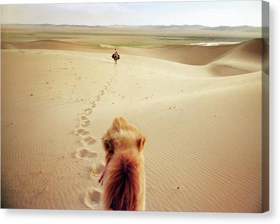 Gobi Canvas Print - Camel Riding In The Desert by Matthieu Paley