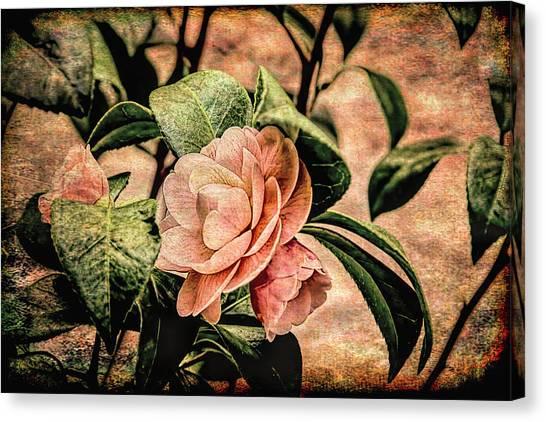 Camellia Grunge Canvas Print