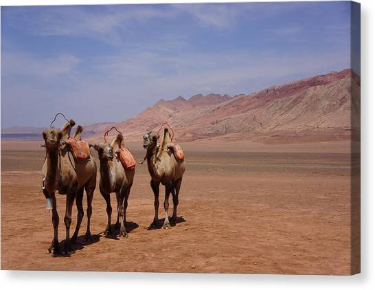 Gobi Canvas Print - Camels On Desert With Huoyan Gobi by Huang Xin
