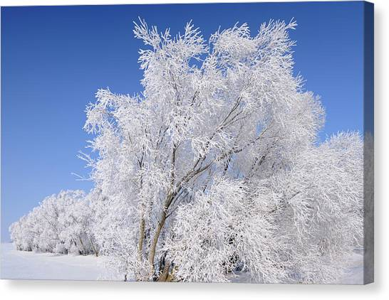 Hoarfrost Canvas Print - Canada, Manitoba, Oakbank by Jaynes Gallery