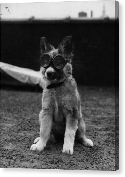 db061143158 Canine Vision Canvas Print