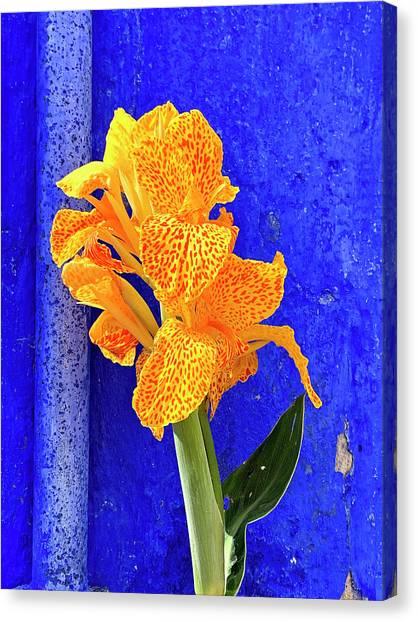 Canna Azure Canvas Print