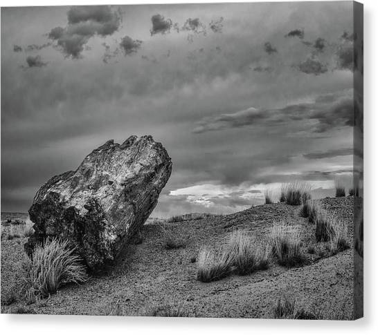 Petrified Forest Canvas Print - Cannon by Joseph Smith