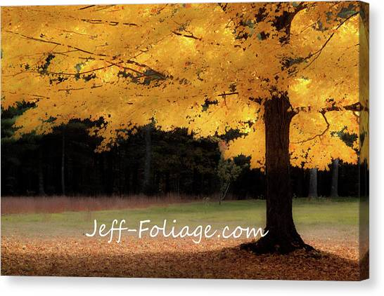 Canopy Of Gold Fall Colors Canvas Print