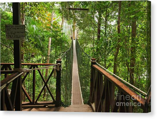 Rope Canvas Print - Canopy Walkway. Taman Negara National by Elena Odareeva