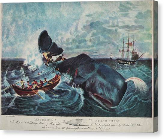 Capturing A Sperm Whale Canvas Print by Hulton Archive