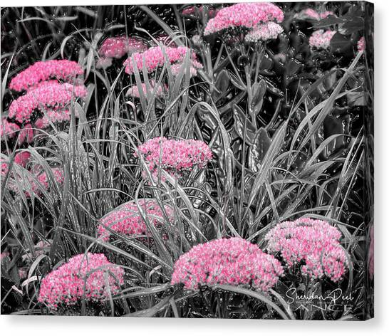 Carved Pink Butterfly Bush Canvas Print