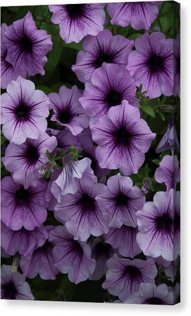 Cascade In Violet Canvas Print