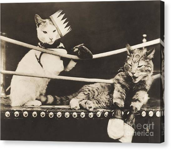 Indoors Canvas Print - Cat Fight by Everett Collection