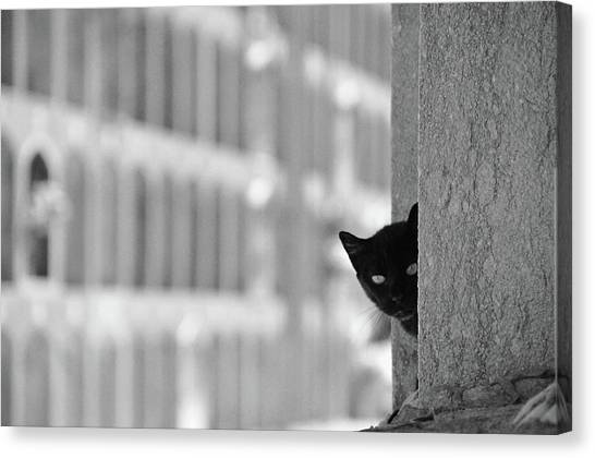 Cat In Cemetery Canvas Print by All Copyrights Reserved By Harris Hui