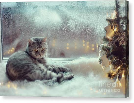 Purebred Canvas Print - Cat In The Winter Window by Alekuwka