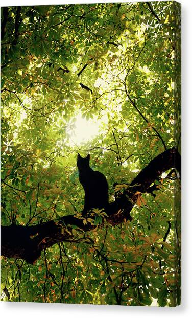 Kittens Canvas Print - Cat On A Tree by Cambion Art