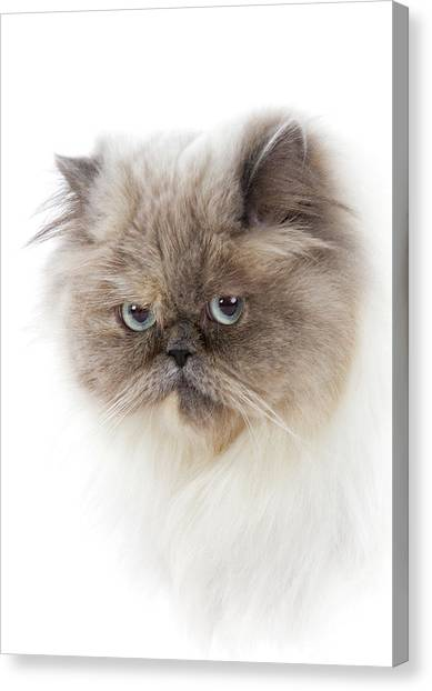 Cat With Long Hair Canvas Print by Www.wm Artphoto.se