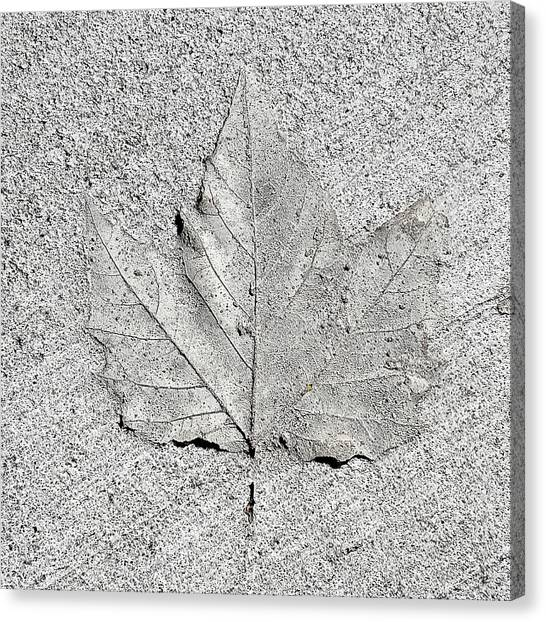 Cement Leaf Canvas Print