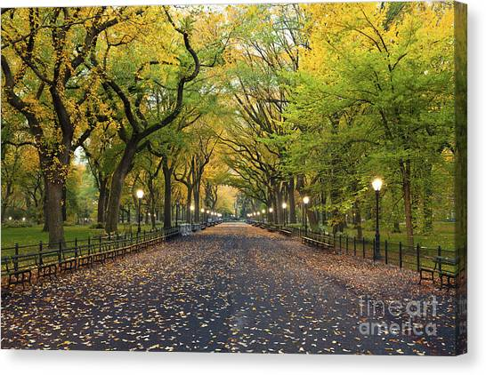 Mall Canvas Print - Central Park. Image Of  The Mall Area by Rudy Balasko