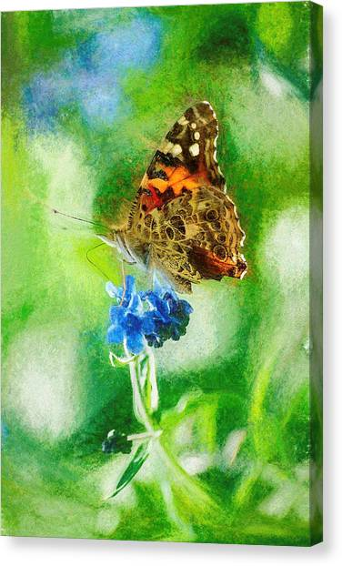 Chalky Painted Lady Butterfly Canvas Print