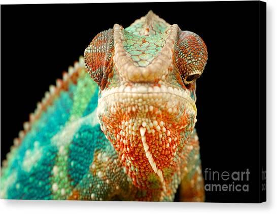 Cutout Canvas Print - Chameleon by Mark Bridger